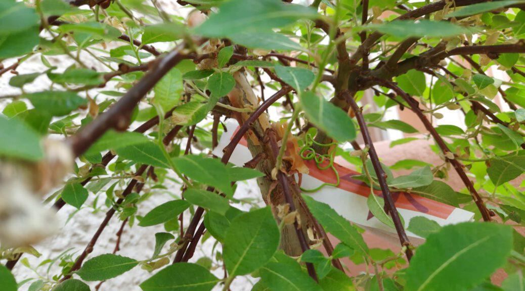 Zwischen Zweigen steckt ein aufgerolltes Stück papier, das mit einer Eulen-förmigen Büroklammer zusammengehalten wird.